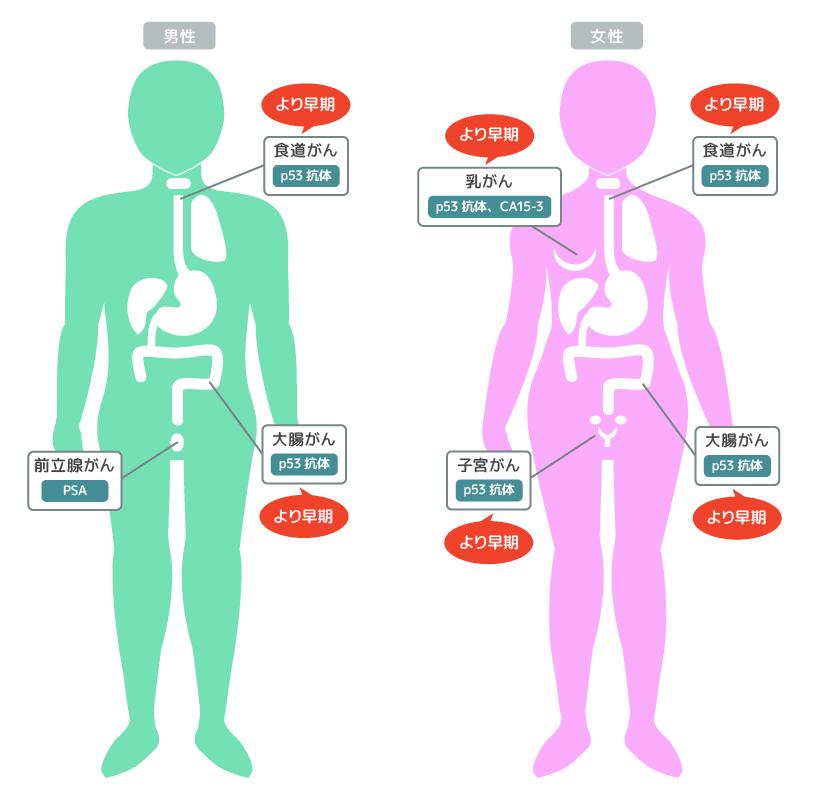 p53抗体 PSA CA15-3