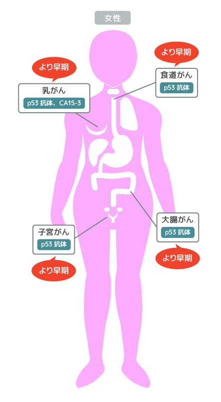 p53抗体 CA15-3